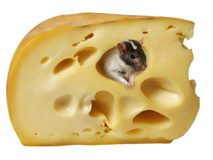 мышки и сыр картинки - Поиск в Google