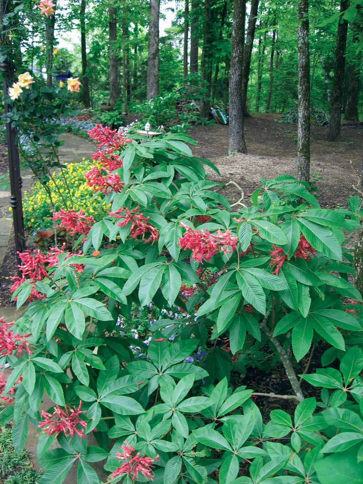118 Best Tennessee Native Plants And Flowers Images On