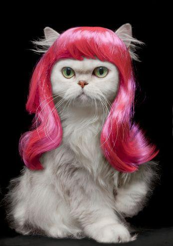 Белый персидский кот носить горячий розовый парик
