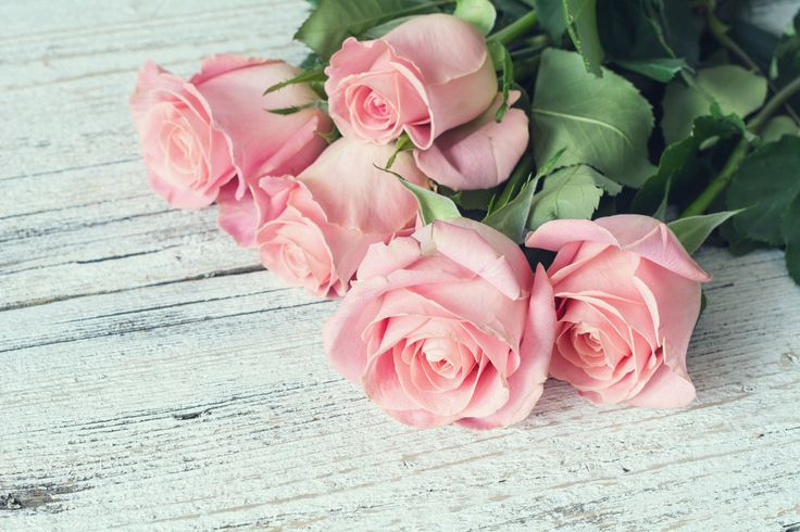 Pink roses on white wooden background by Vladislav Nosick on 500px