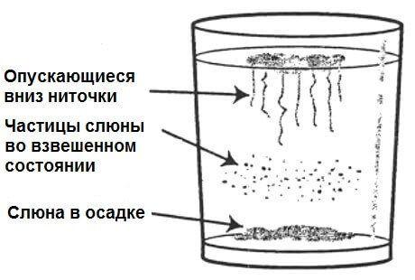 Домашний тест на наличие грибка кандида в организме и способы лечения дисбаланса • Искусство здоровой жизни