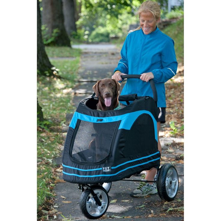 Best 25 Dog Stroller Ideas On Pinterest Chihuahuas
