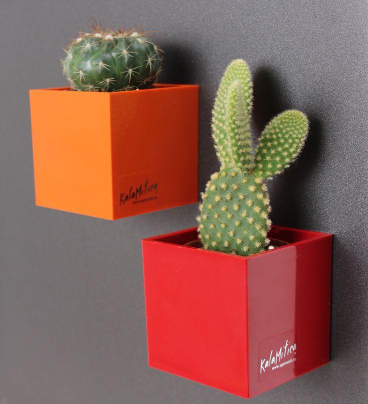 Cactus in magnetic mini pots