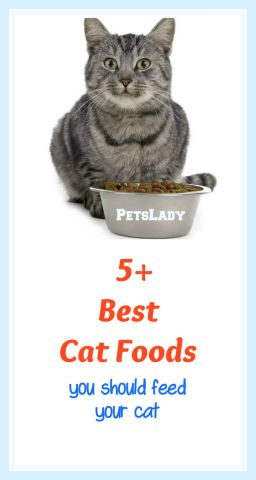 Which is the best cat food for your cat? My picks for the top 5 cat foods are chosen for their higher quality ingredients and their approximation to a cat's natural diet in the wild - mainly the kinds of foods cats hunt. The top 5 foods consist almost totally of protein, the same high grade protein that is sold for human consumption - no fillers or by-products. Here are our picks for the Top 5 Best Cat Foods To Feed Your Cat...