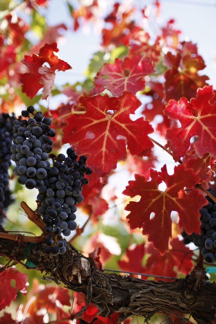Where Washington Wine Meets Woodinville Farming Wawines Woodinvillewinery Drinklocal Vinetowine Viticulture With Images Washington Wines Wines Sauvignon Blanc