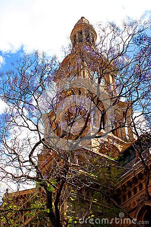 Sidney town hall and a blossoming Jacaranda tree in front of it.