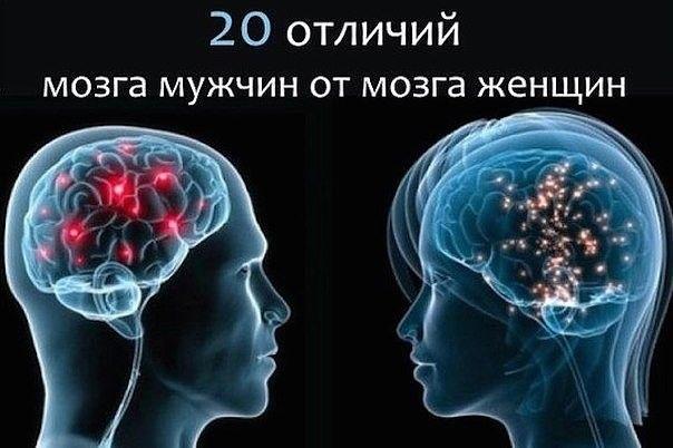 Мужской и женский мозг — 20 отличий  1. Давно доказано, что мозг женщины на 10% меньше мужского. Но на уровень интеллекта это не влияет.  2. Интересно, что уменьшается мужской мозг с возрастом быстрее женского.  3. Для решения одной и той же поставленной задачи мужчины и женщины задействуют разные части головного мозга.  4. Если мужчина заблудился, то будет запоминать направление движения и пройденное расстояние, а женщина – объекты-ориентиры. Так же и за рулем: мужчина помнит дорогу по…