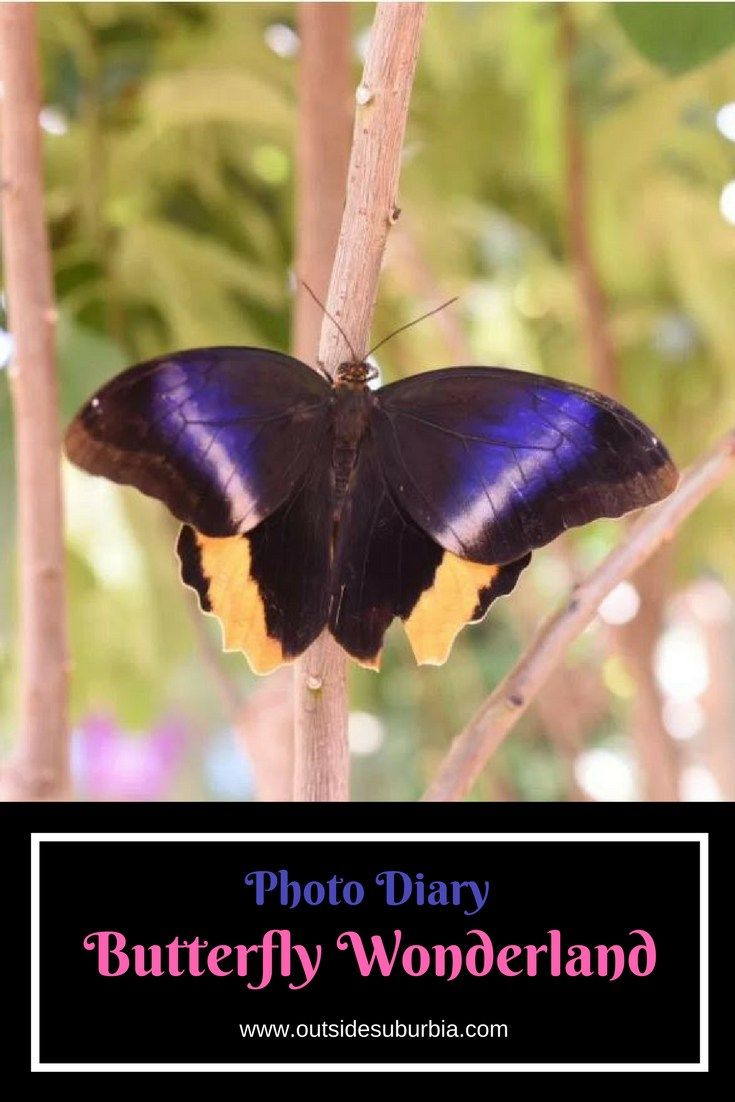 A photo diary of the Butterfly Wonderland, the largest indoor butterfly pavilion in America located in Scottsdale, Arizona.