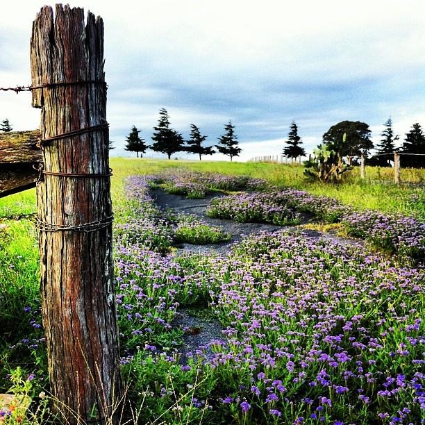 Toowoomba, Australia | #country