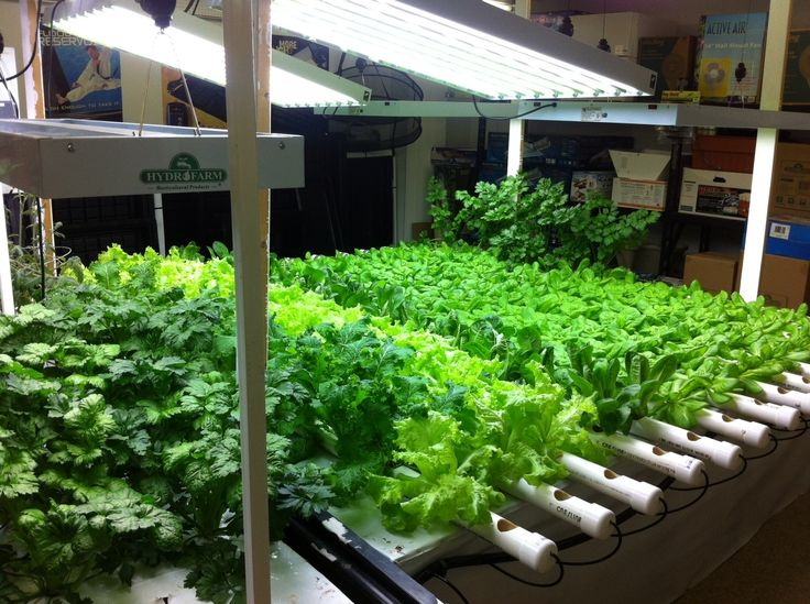 29 best images about cannabis grow lighting on pinterest - Hydroponic container gardening ...