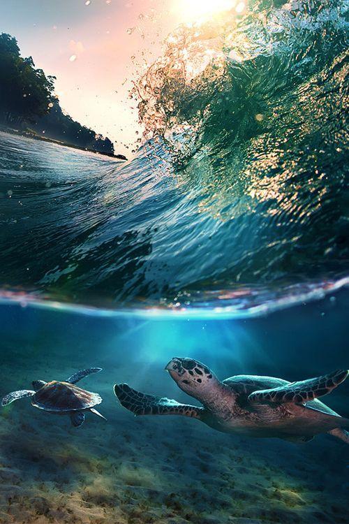 Tropical Paradise ~Sea Turtles ~ Maldives
