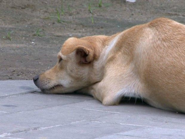 Segundo policiais, cadela está cansada e com medo, mas já foi alimentada (Foto: Reprodução/ TV Gazeta)