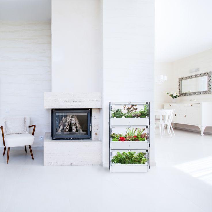 Gratka dla Miejskich Ogrodników - hydroponiczna szklarnia do całorocznych upraw domowych Green Farm. A na dodatek jak pięknie prezentuje się w pokoju... :-) #GreenFarm #DomoweUprawy #Hydroponika  #KuchennyOgród #Design #NowoczesneWzornictwo #LifeStyle #IndoorGarden #HomeGarden #Hydroponics #UrbanGarden #Ogrodnictwo #Gardening
