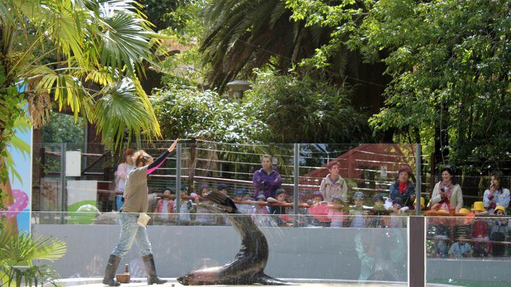 Parque Zoológico da Maia.