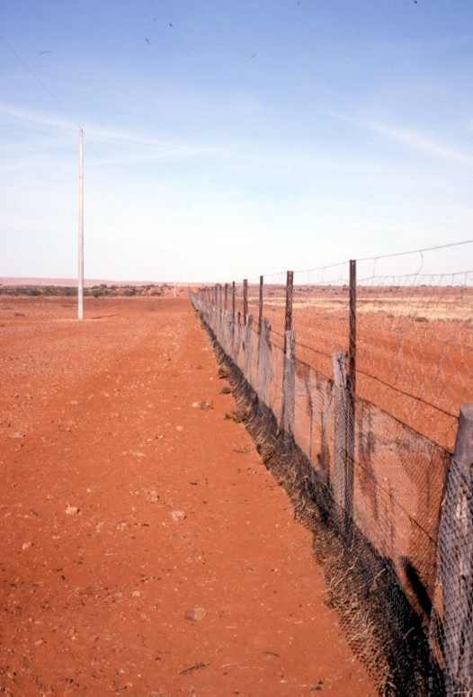 The Dingo Fence, built during the 1880s, to keep dingoes (native dogs) out of the relatively fertile south-east part of Australia (where they had largely been exterminated) and protect sheep flocks. One of the longest structures in the world, it's is the world's longest fence, stretching 5,614 kilometres (3,488 mi) from south east Qld through thousands of kilometres of arid land, ending west of the Eyre peninsula in S. Australia where the Nullarbor Plain meets the Great Australian Bight.
