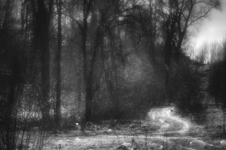 The Spring forest road (Monocle) © By Evgeny Fridgelm.