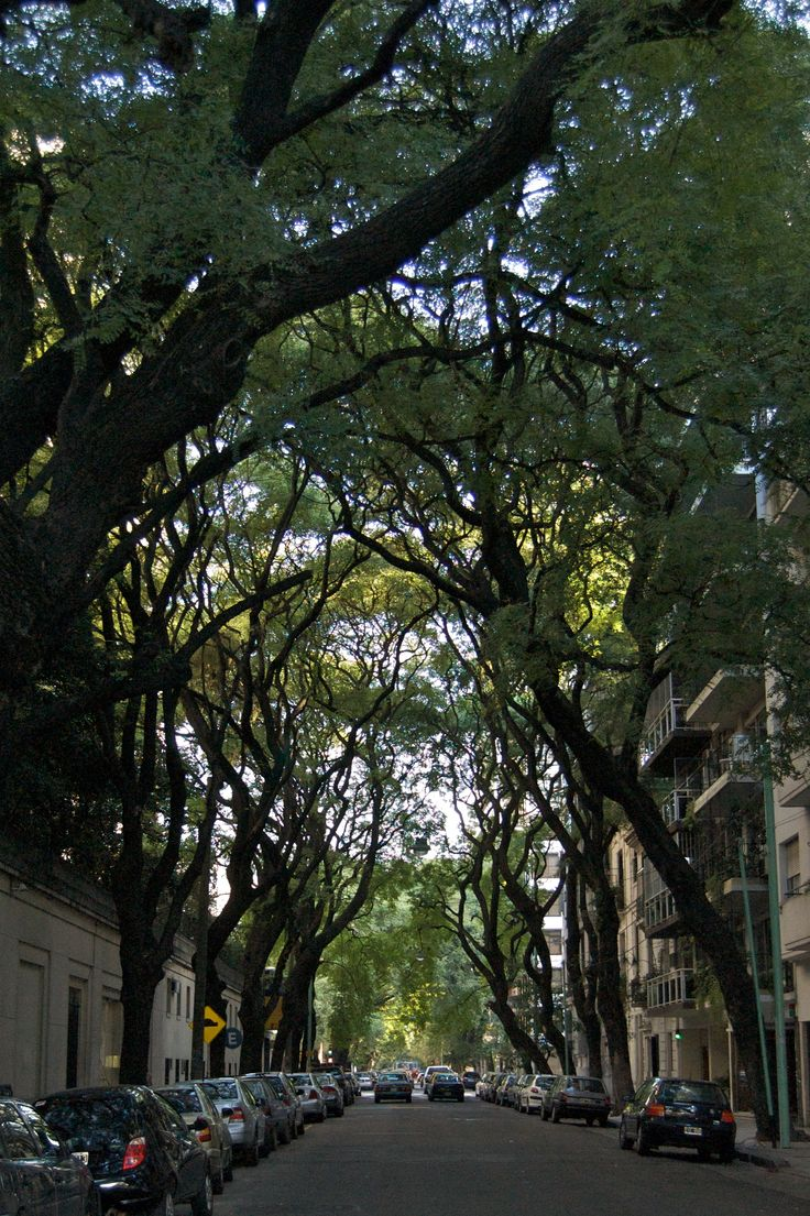 1000 Images About URBAN TREES On Pinterest