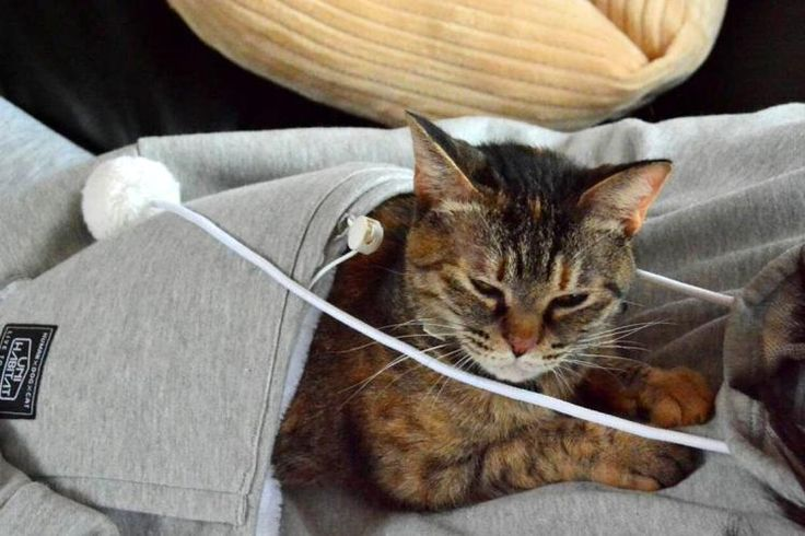 Hoodie Sweatshirt With Giant Front Pocket To Hold Cat