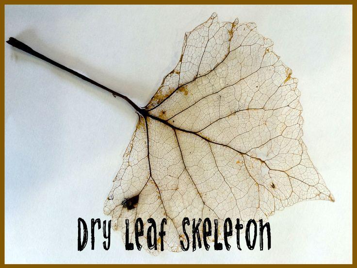 leaf skeleton for halloween little treks garden artsy halloween decoration leaf skeleton tutorial