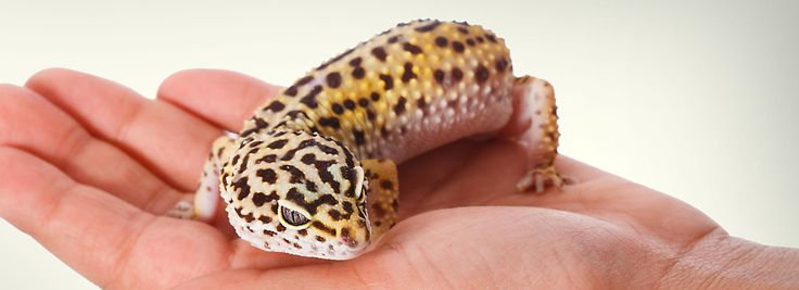 Leopard Gecko Supplies & Tank Accessories   PetSmart