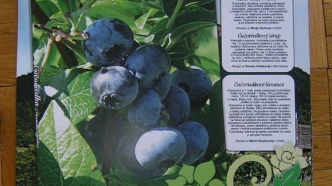 Ponúkame vám zopár originálnych receptov zo zdravých a chutných lesných plodov.