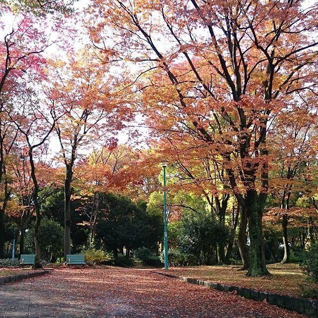 日曜日に技能プラザへ行く途中、吹上公園の横を通りかかると紅葉がきれいでした(*´ω`*)のんびりベンチに座ってみたい…✨✨ #紅葉#吹上公園#東亜和裁紅葉まつり2016 #名古屋#東亜和裁