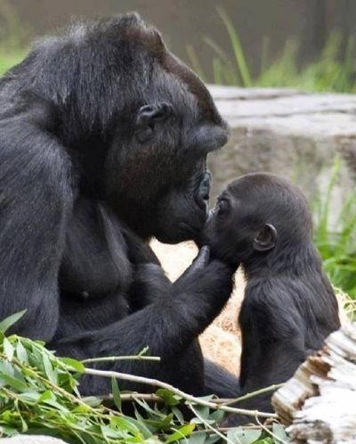 GrabOn #Lovestruck  Best in motherly love! ♥