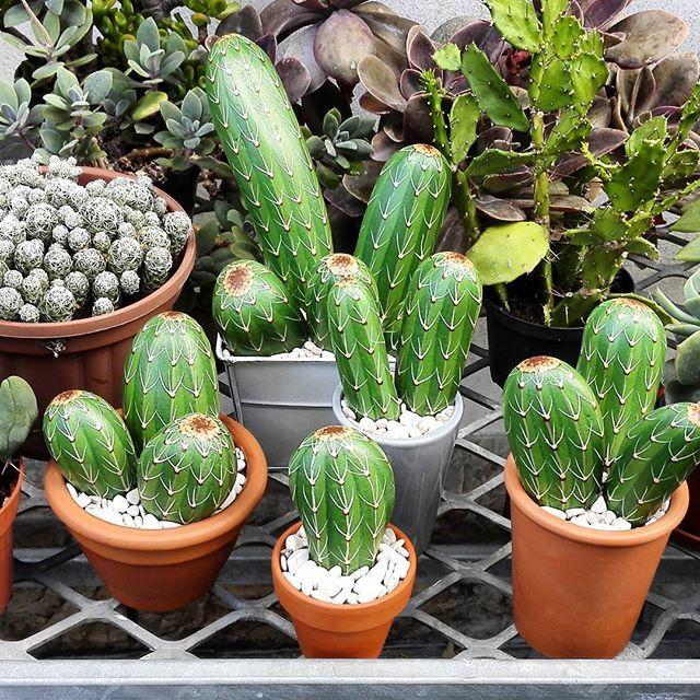 558 best pebbles and stones cactus images on pinterest. Black Bedroom Furniture Sets. Home Design Ideas