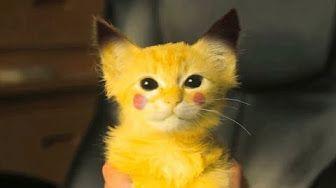 Si te Ries Pierdes Reto Gatos Graciosos - YouTube