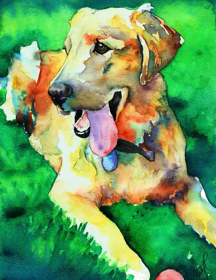 Yellow Labrador Painting by Christy Freeman - Yellow Labrador Fine Art Prints and Posters for Sale