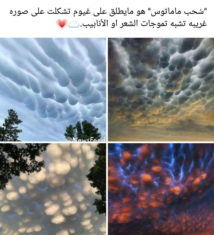سبحان الله الجمال عد ى الكلام In 2021 Nature Photography Flowers Nature Photography Natural Phenomena
