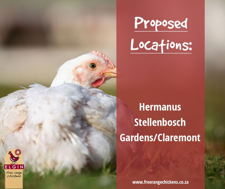 Due to the huge response for more stores to open in your area, we have decided to look for premises for two more areas. We need your help! Can anyone recommend premises of around 150-180m2 in the following areas that are available for rent? Our areas of interest are: Hermanus Stellenbosch Gardens/Claremont