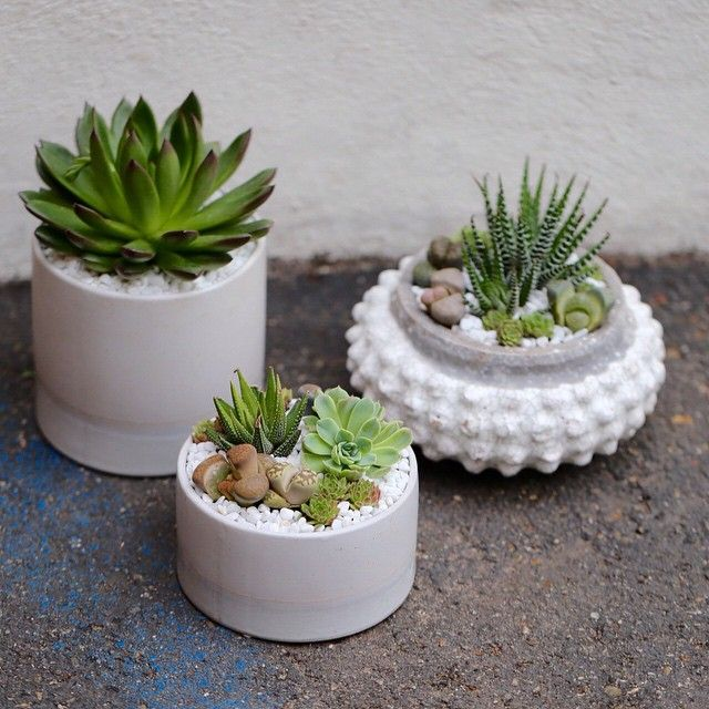 Succulent arrangements in assorted white containers by Dalla Vita. DallaVita.com