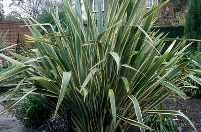 RHS advice & tips on garden & indoor plants   Plant finder ...