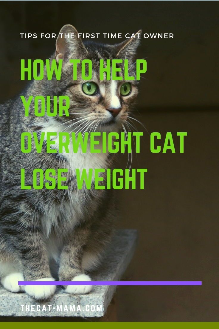 560b38b840bd0dff3e9abcc3d378817c - How To Get My House Cat To Lose Weight