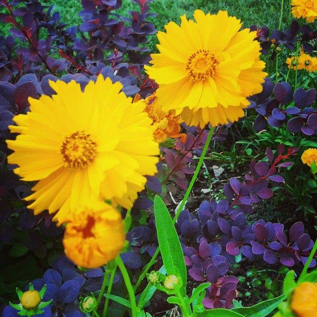 Flor Amarilla - UC del Maule - 2014 #Flor #Amarilla #Flowers #Yellow