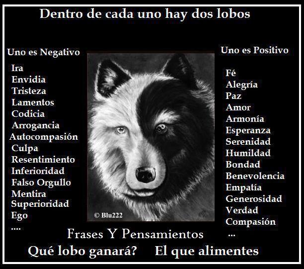 Imagenes De Lobos Con Frases Romanticas Imagenes Del Lobo Solitario