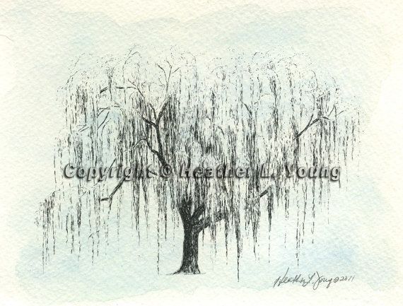 Weeping Willow Tree Watercolor Painting Drawing Print Aurora No 1 In Icy  Blue