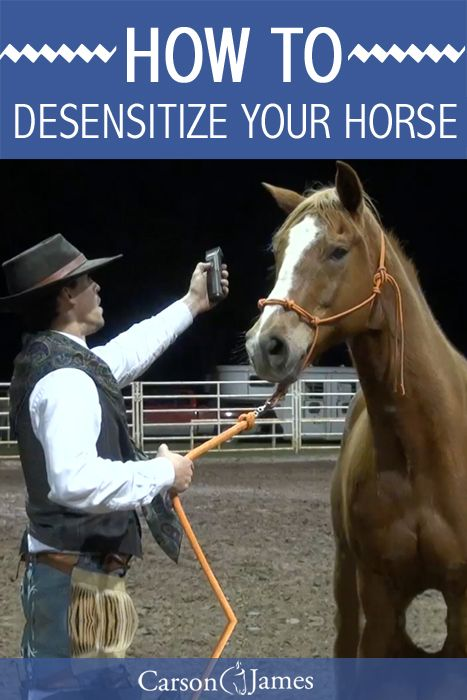 Some horse's are naturally afraid of certain things like fly spray, clippers, water, etc. This horse training exercise will show you how to naturally desensitize your horse to any object that he or she is afraid of.