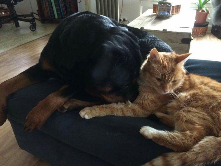 My dog Moya and my cat Speedy