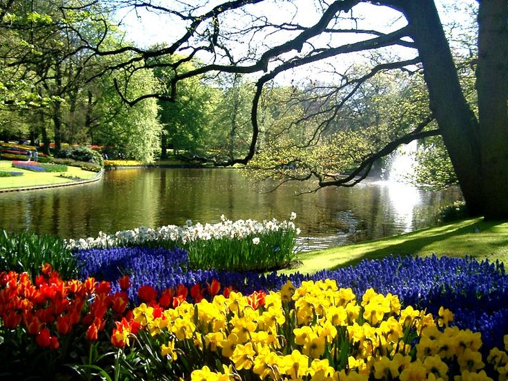 Keukenhoff In Lisse Hollandacres And Acres Of Tulips Swans