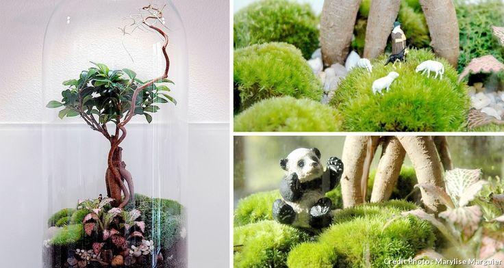 21 best Terrarium images on Pinterest Plants, Gardening and Factories - que faire en cas d humidite dans une maison