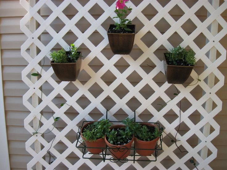 Trellis Container Gardening Provide Vertical Hanging Space