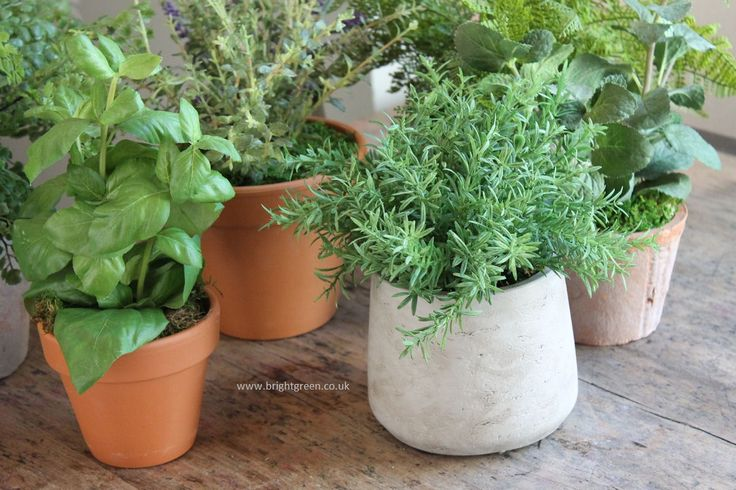 Awesome Best Pots for Herbs