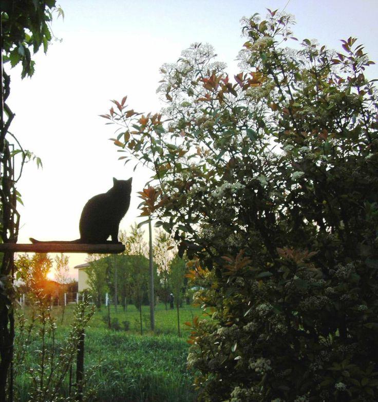 Lanera osserva il tramonto