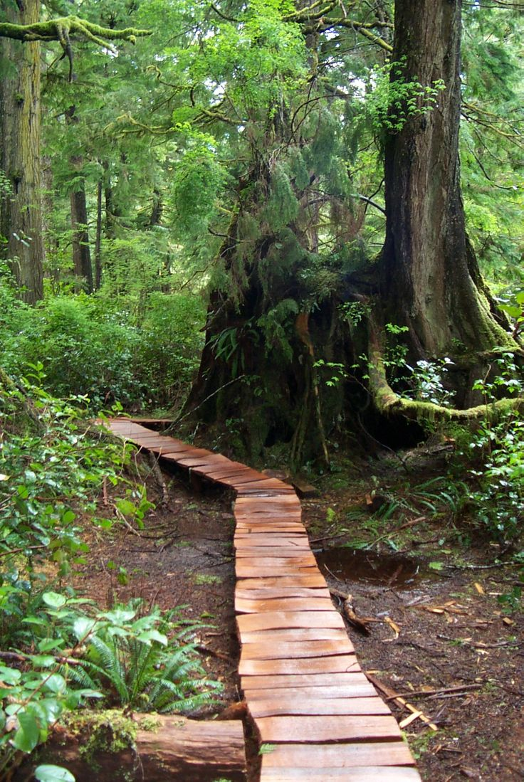 Wander through the beautiful rainforest and bog trails in Tofino BC Canada