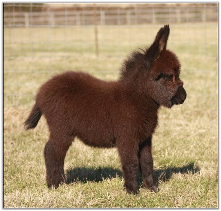 Too cute, miniature donkey. It would grow up a little though.