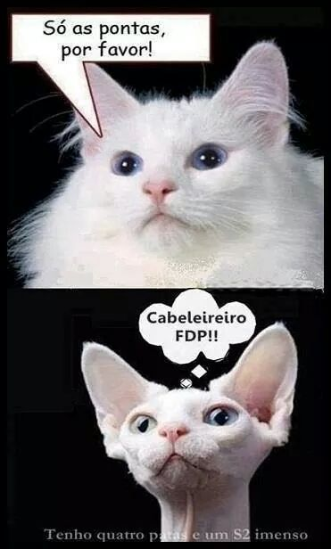 Resultado de imagem para gatos engraçados com frases