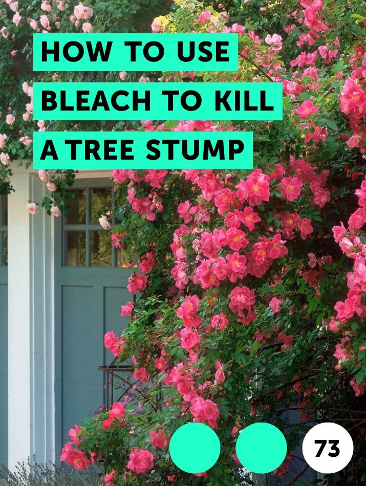 How To Use Bleach To Kill A Tree Stump Plants Growing Grass Companion Planting