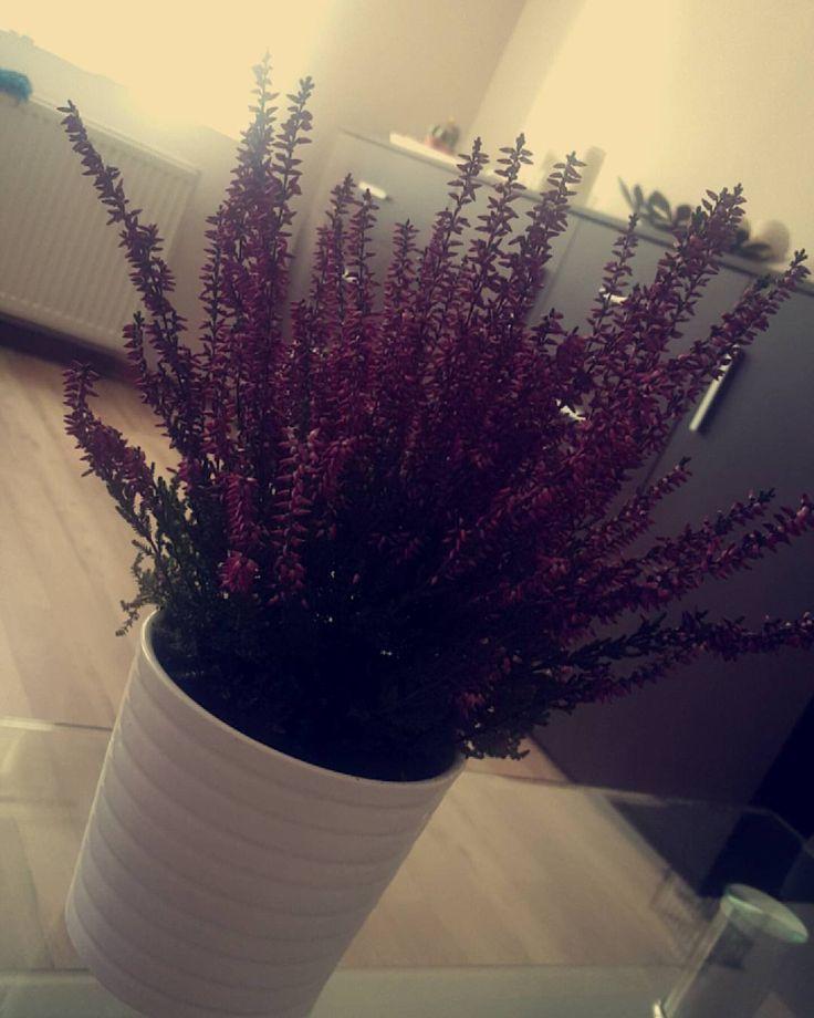 """Polubienia: 14, komentarze: 1 – Magda Konieczny 💎💄 (@em.a.gie.de.a.a) na Instagramie: """"#lubięwrzesień #wrzosowelove #uwielbiam #home #homedecor"""""""